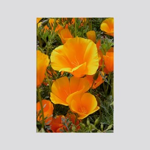 Poppies (Eschscholzia californica Rectangle Magnet